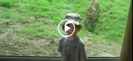 Lion Attempts to Eat Child Although Enjoying