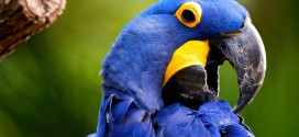 Parrot HD Wallpapers