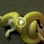 Snake vs Bunny Dangerous Snakes Video Must to Watch