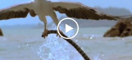 Eagle vs Snake New Amazing Video